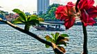 HDR Riverview in Bangkok