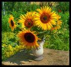 HDR Sonnenblumen