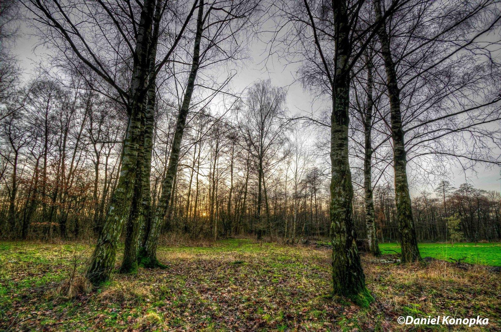 HDR - Sonnenuntergang im Wald