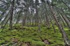 HDR Wald