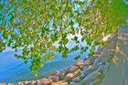 HDR_arbre