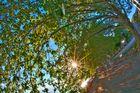 HDR_arbre2