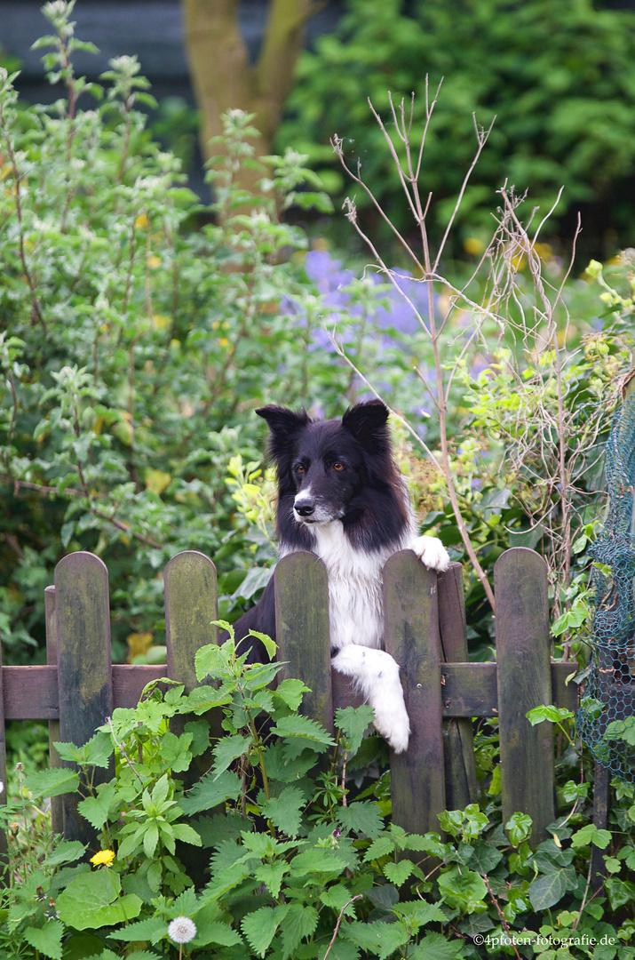 He Du mein Garten
