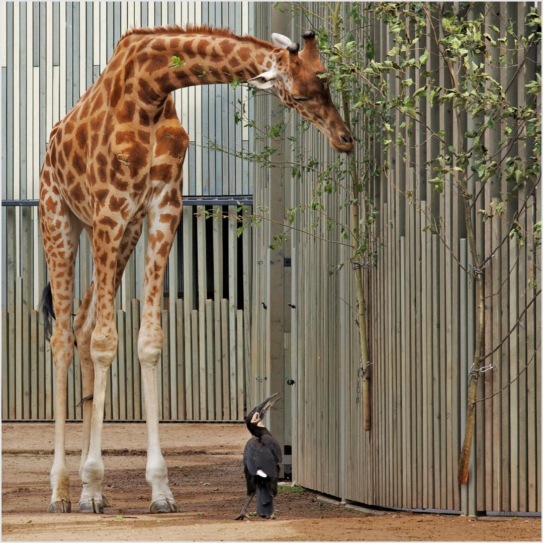 He, Langer, lohnt sich das da oben? Wenn nicht, fliege ich gleich weiter rüber zu den Affen.