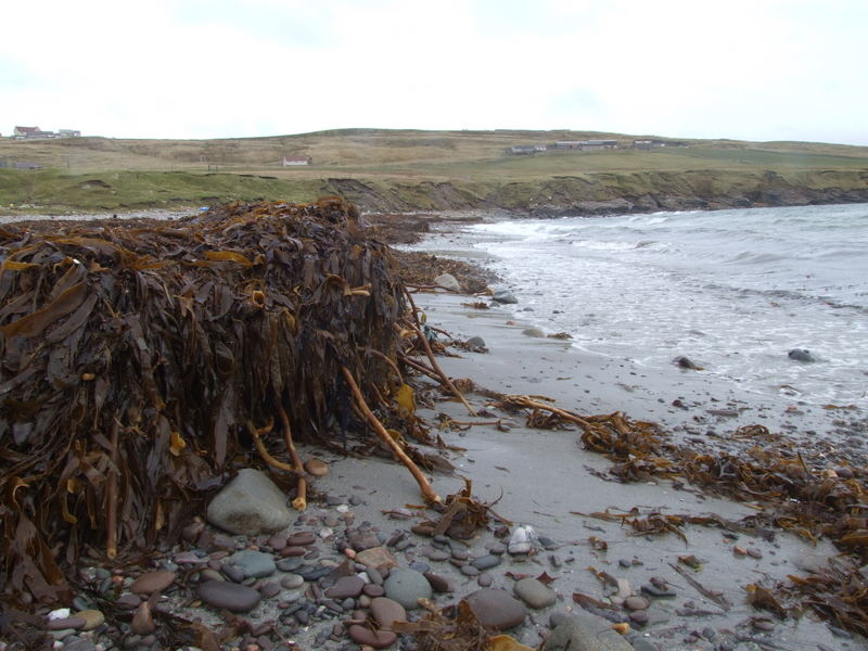 Heaps of seaweed
