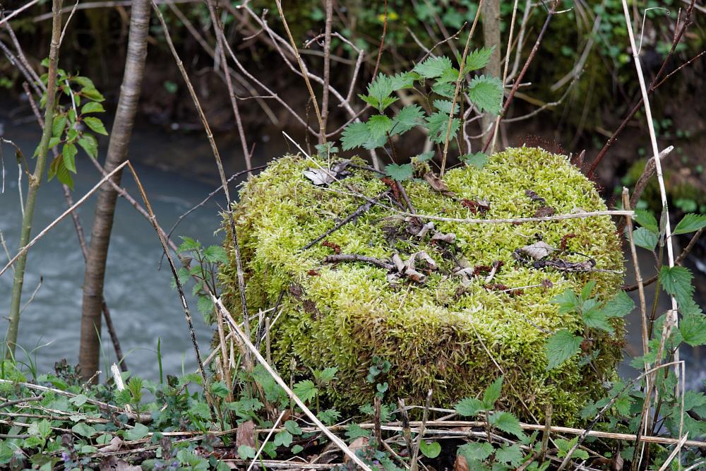 heart of moss