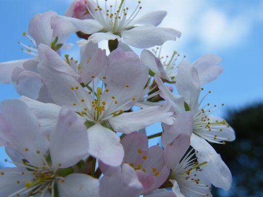 Heavens Blossom