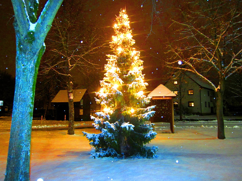 hedersdorf weihnachtsbaum lichterbaum schnee winter. Black Bedroom Furniture Sets. Home Design Ideas