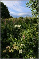 hedgerow near richmond