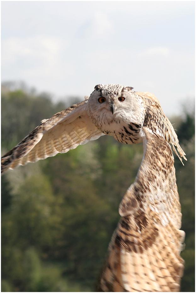 Hedwig...