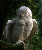 Hedwig... :-)