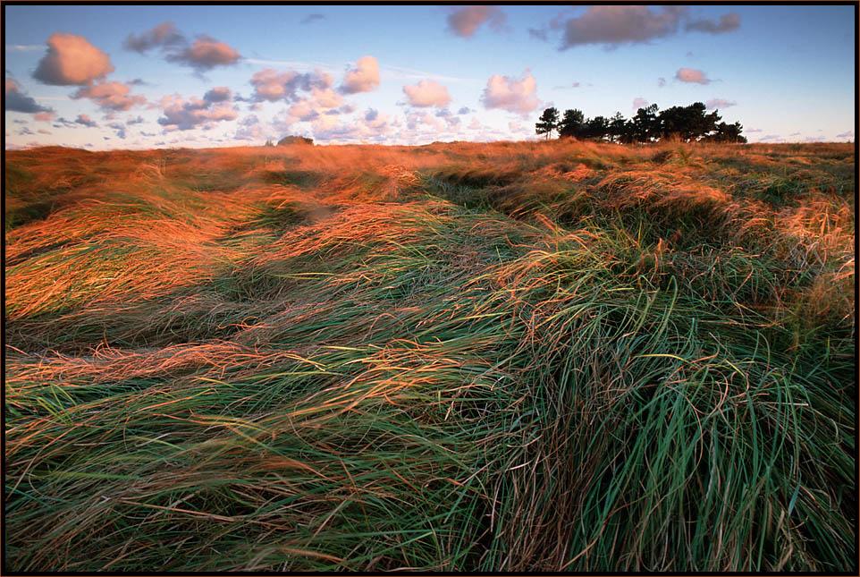 Heide...