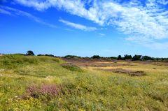 Heide auf Hiddensee