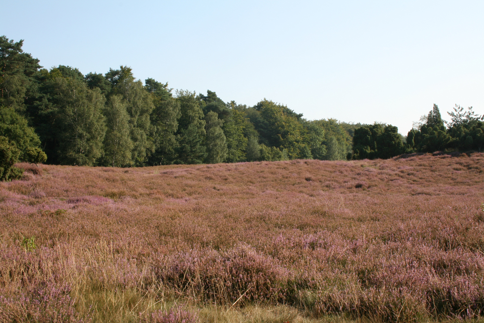 Heide bei Haltern 2