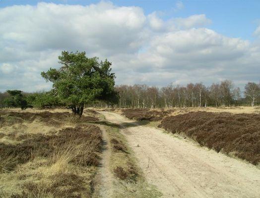 Heide bij Gasteren (Drenthe, Nederland)