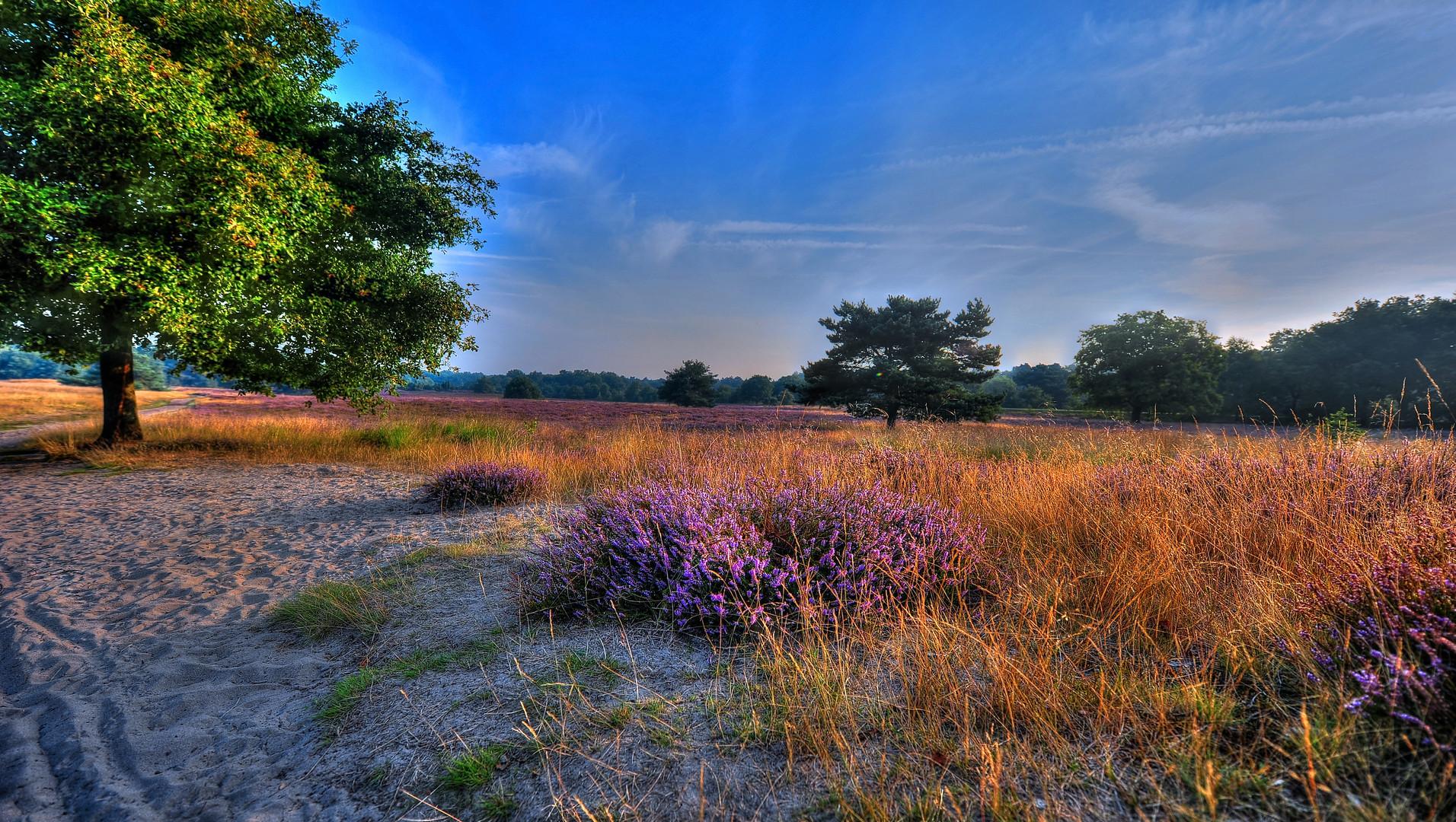 Heide im Morgenlicht 1