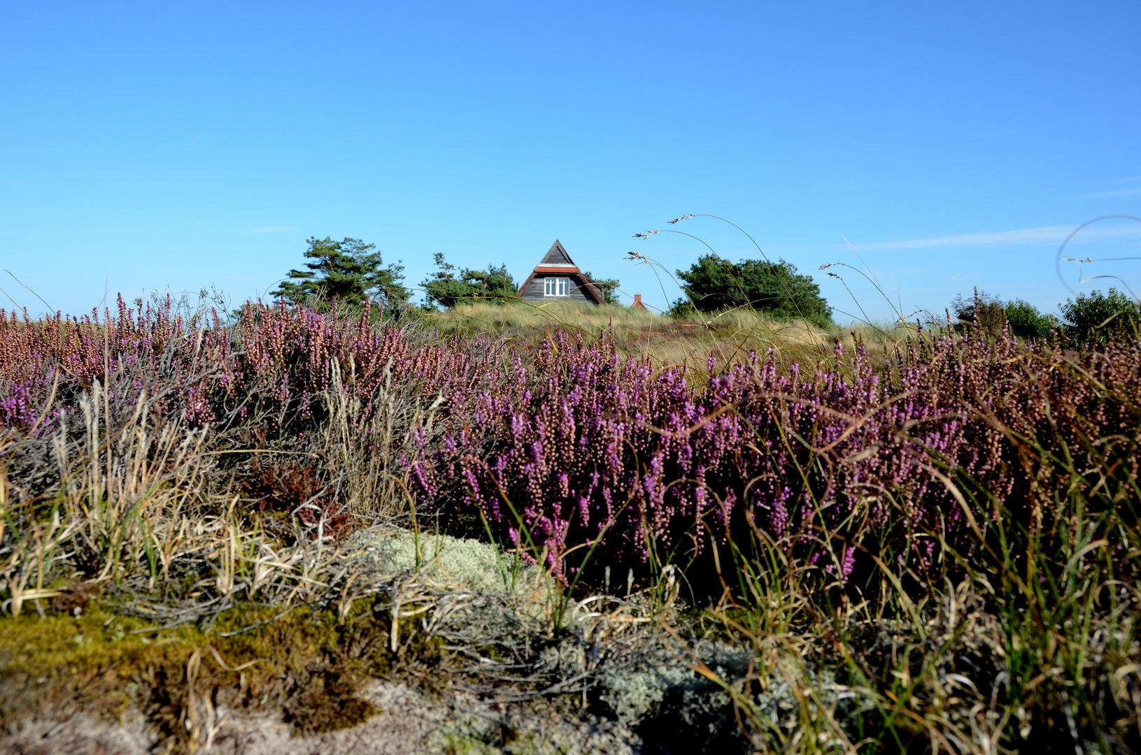 Heide im Oktober