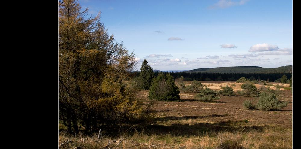 Heide im Sauerland
