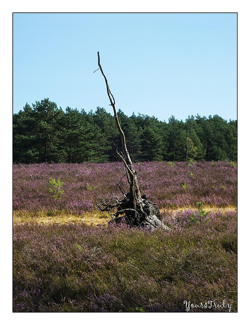 Heide-Impression