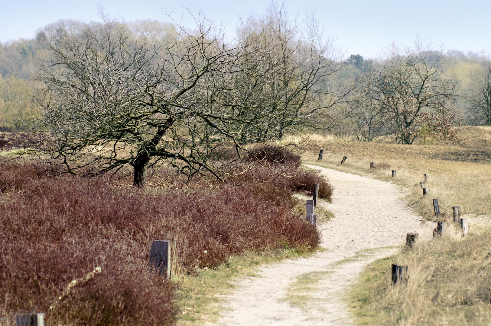 Heide in den Boberger Dünen
