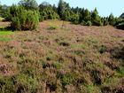 Heide Landschaft