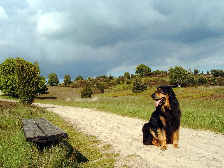 Heide mit Hund