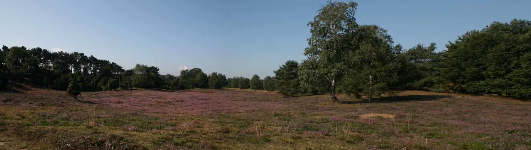 Heide Panorama