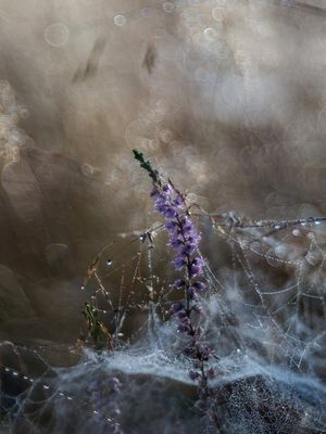 Heide-Poesie
