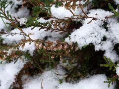 Heide unter Schnee ...
