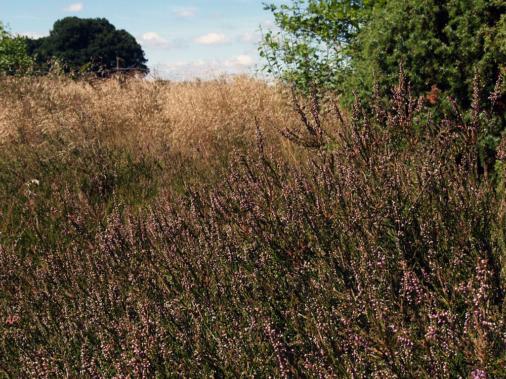 Heide-Wanderung (1)