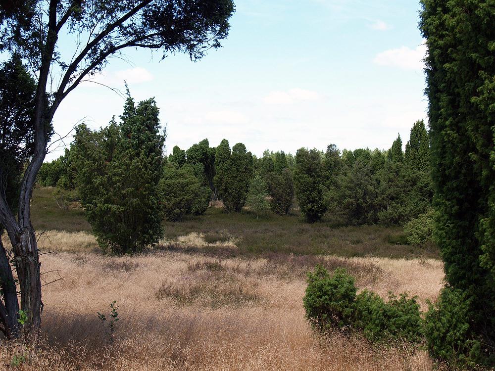 Heide-Wanderung (2)