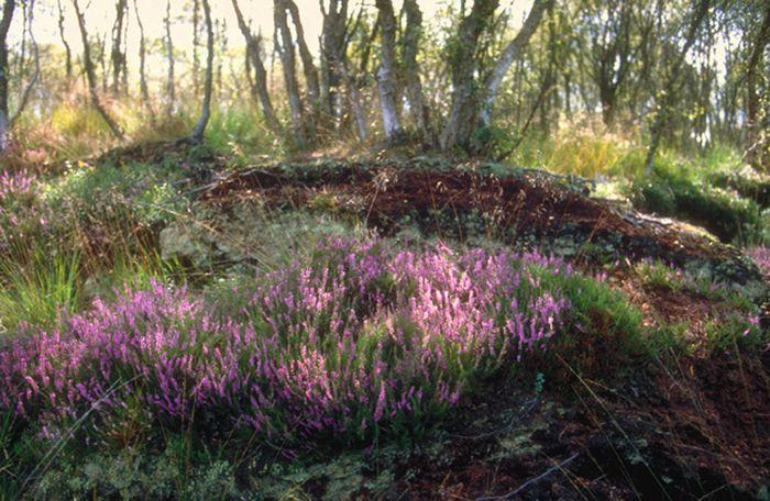 Heidebank im Moor