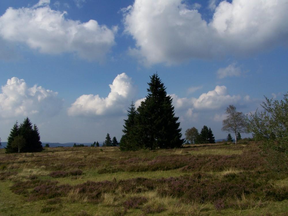 Heidelandschaft Hohe Bracht