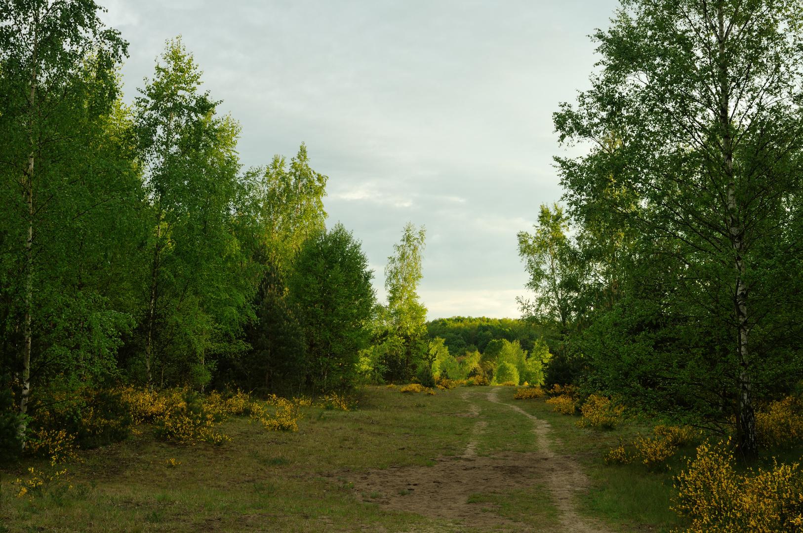 Heidelandschaft im Abendlicht