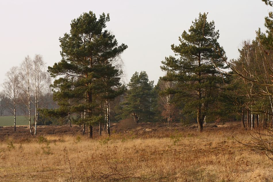 Heidelandschaft im Februar..