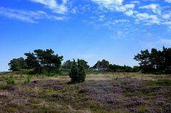 Heidelandschaft Insel Hiddensee 2017