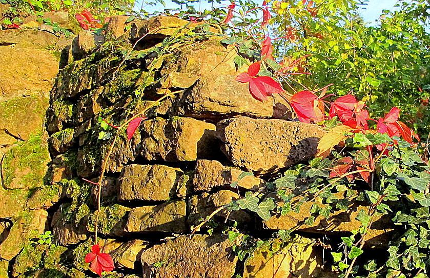 Heidelberg Philosophenweg:Trockenmauer bei Sonnenuntergang