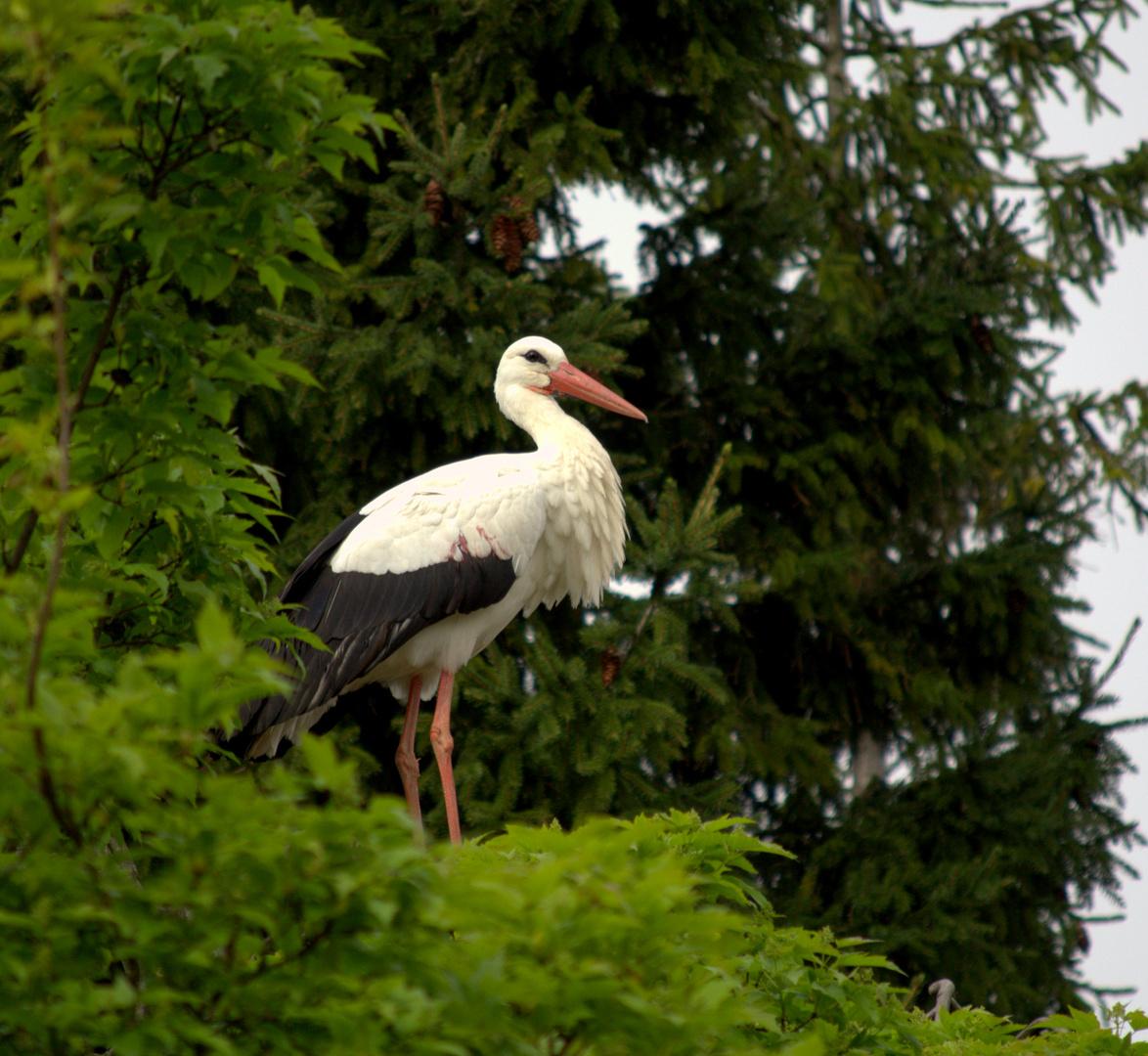 Heidelberg Zoo #3