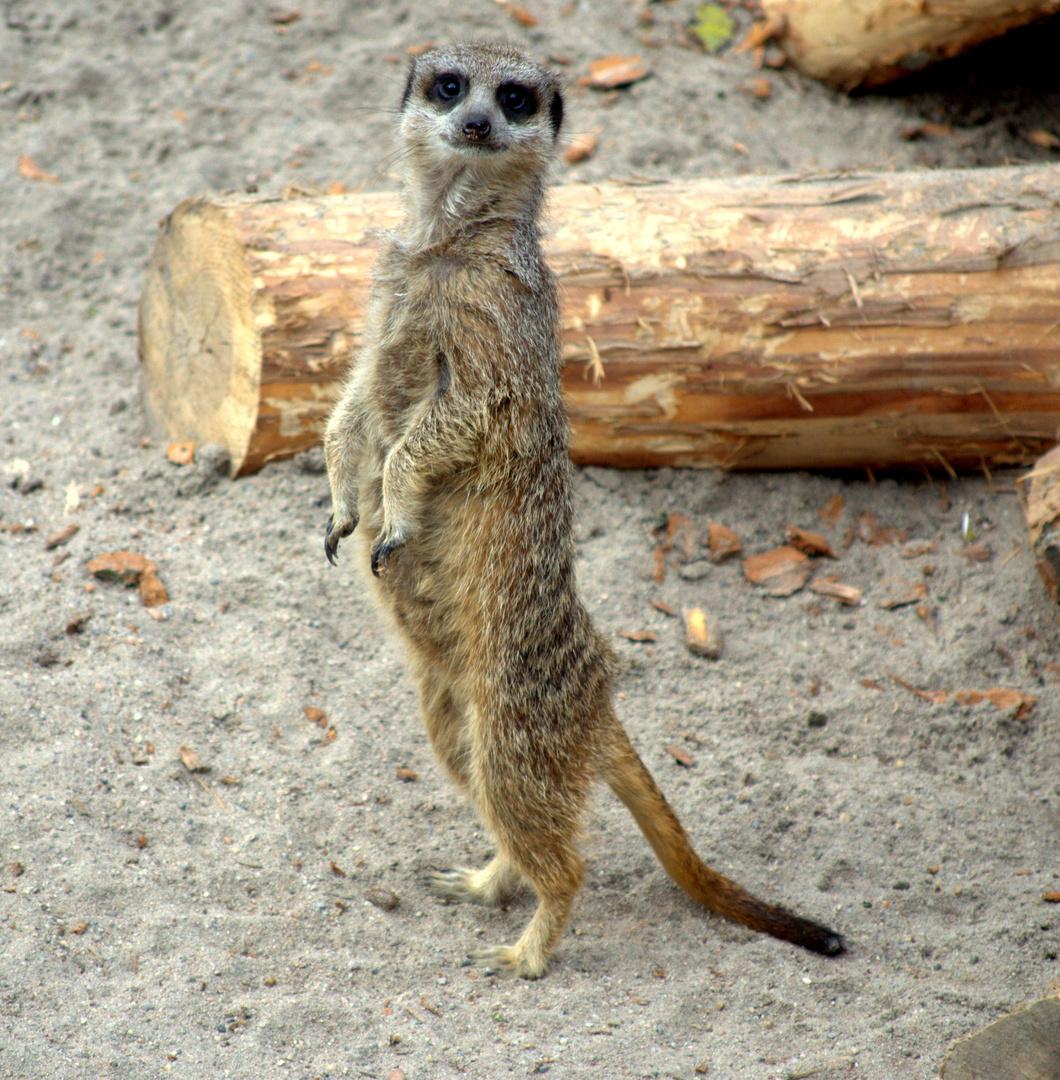 Heidelberg Zoo #4