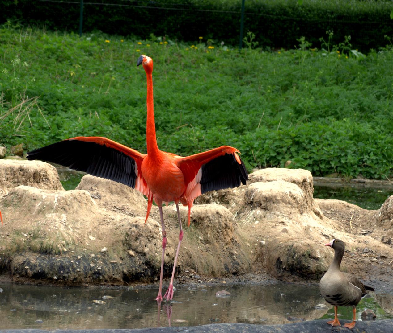 Heidelberg Zoo #5