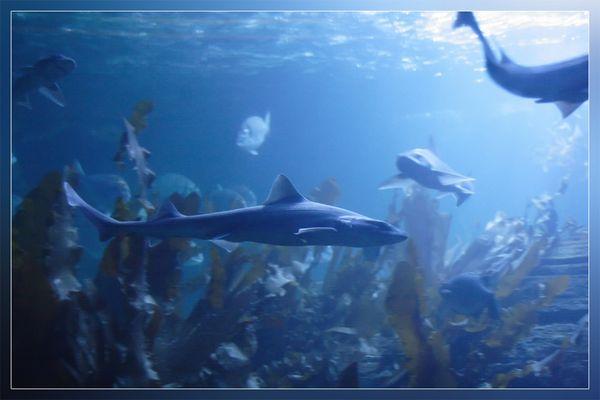Heie im Sea Life