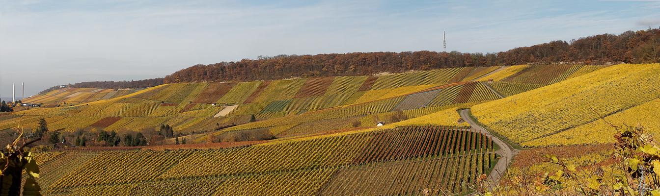 Heilbronner Weinberge im Herbst