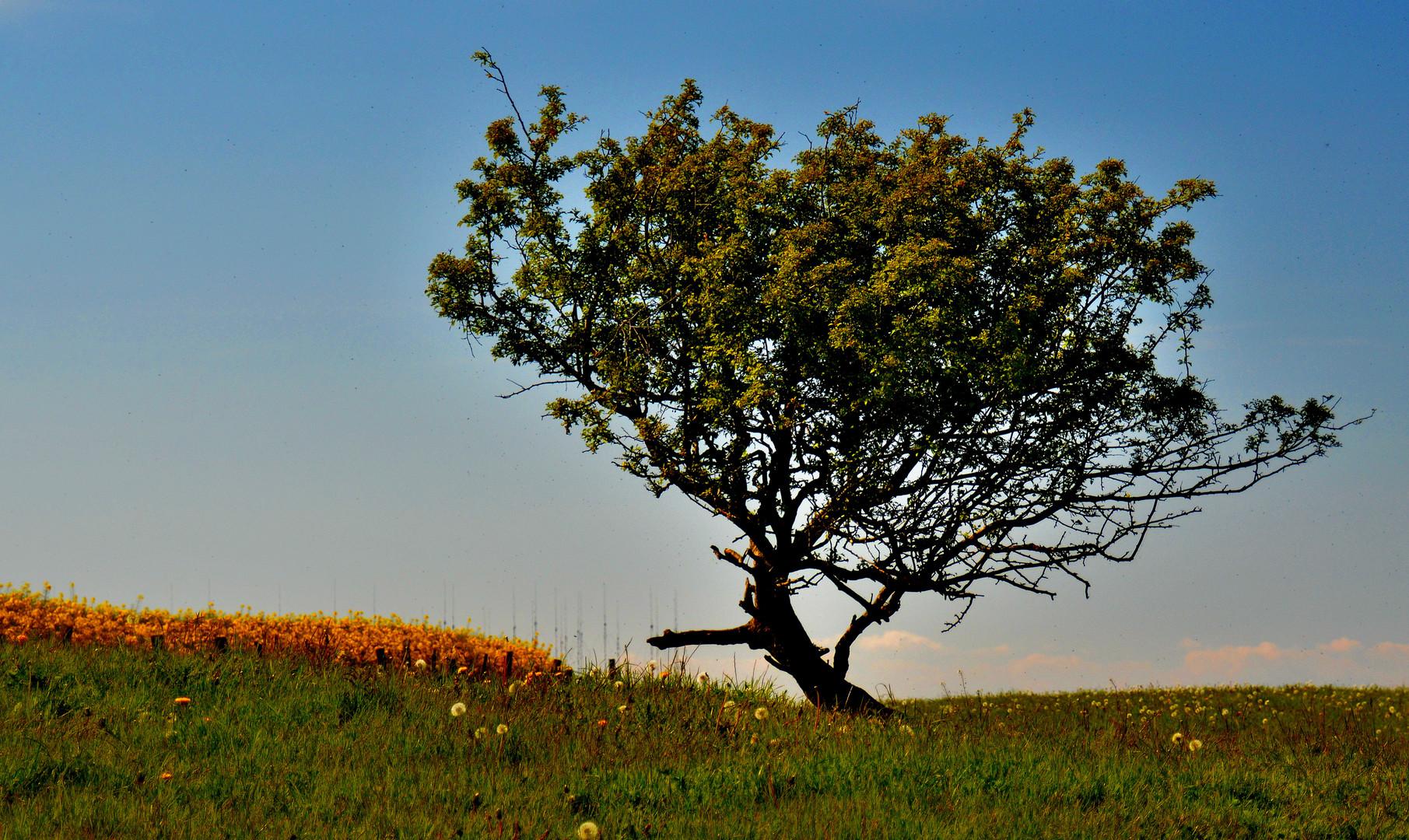 Heiliger Baum 2