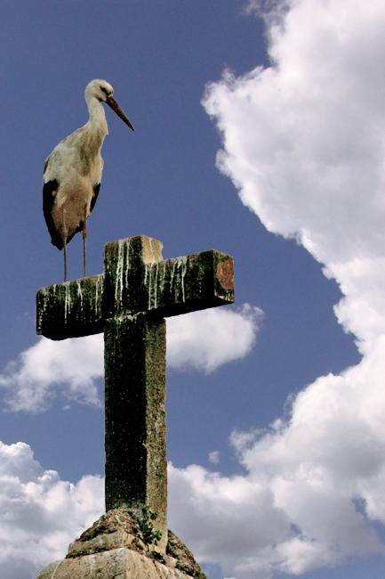 Heiliger Storch!