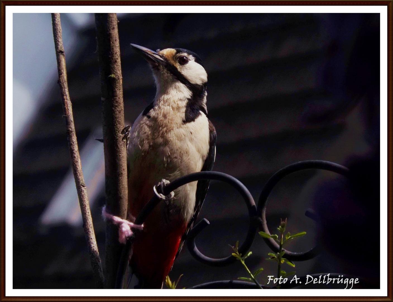 Heimische Vögel Nr.02