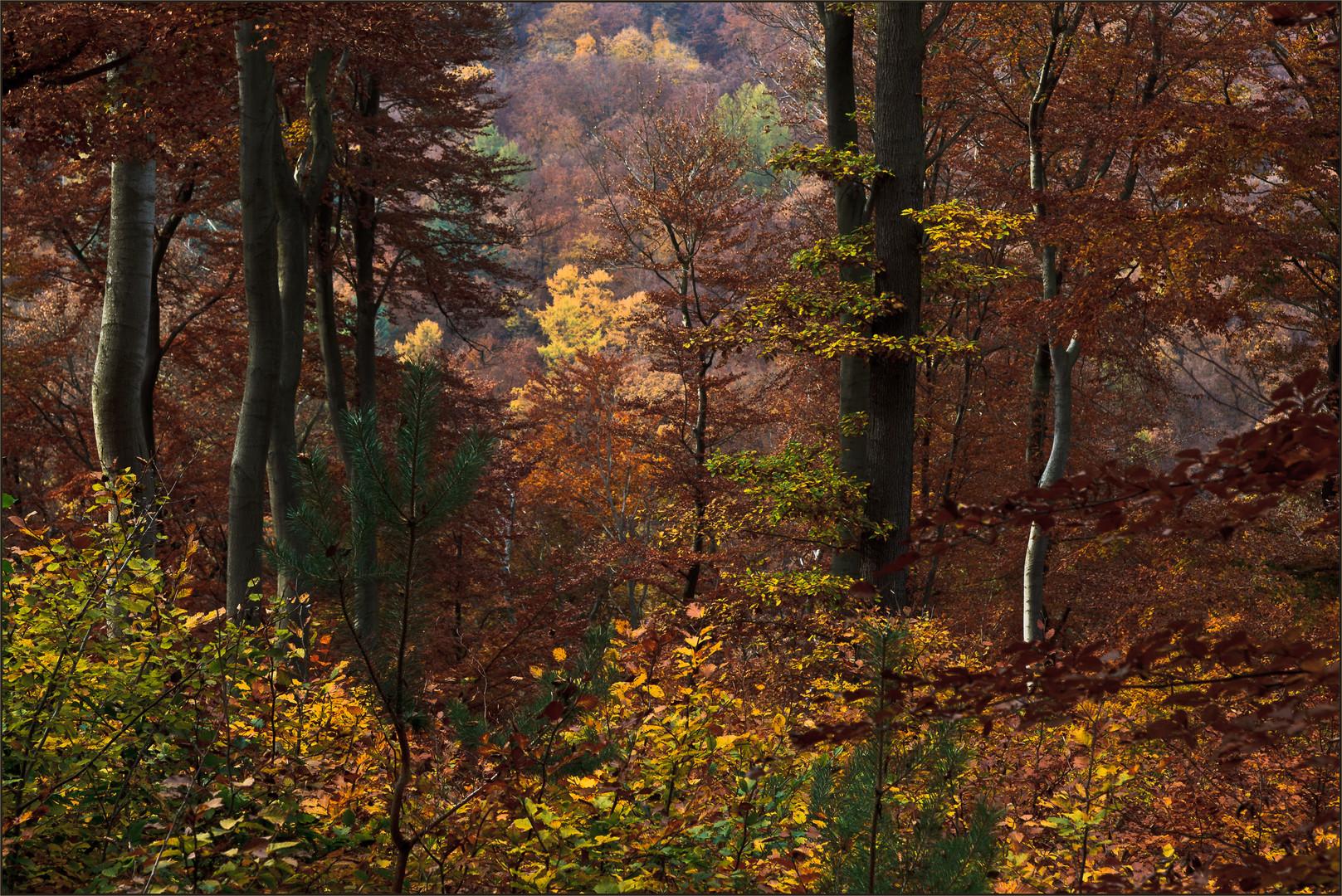 Heimischer Herbstwald