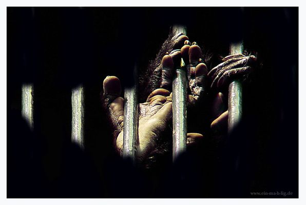 ...heimisches Guantanamo...