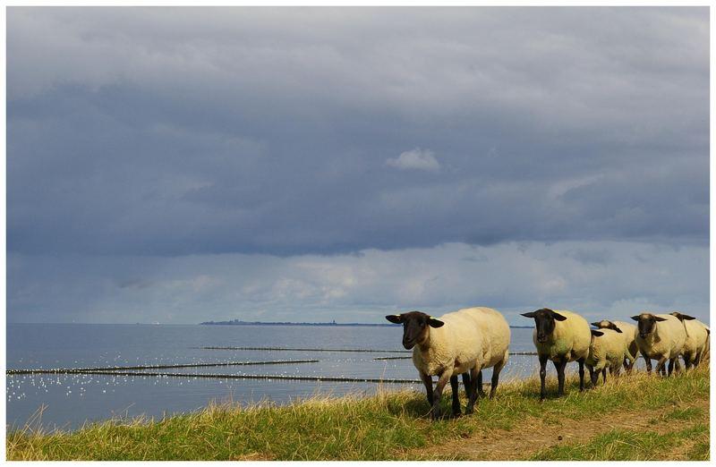 Heimwärts......heute mittag am Nordseedeich