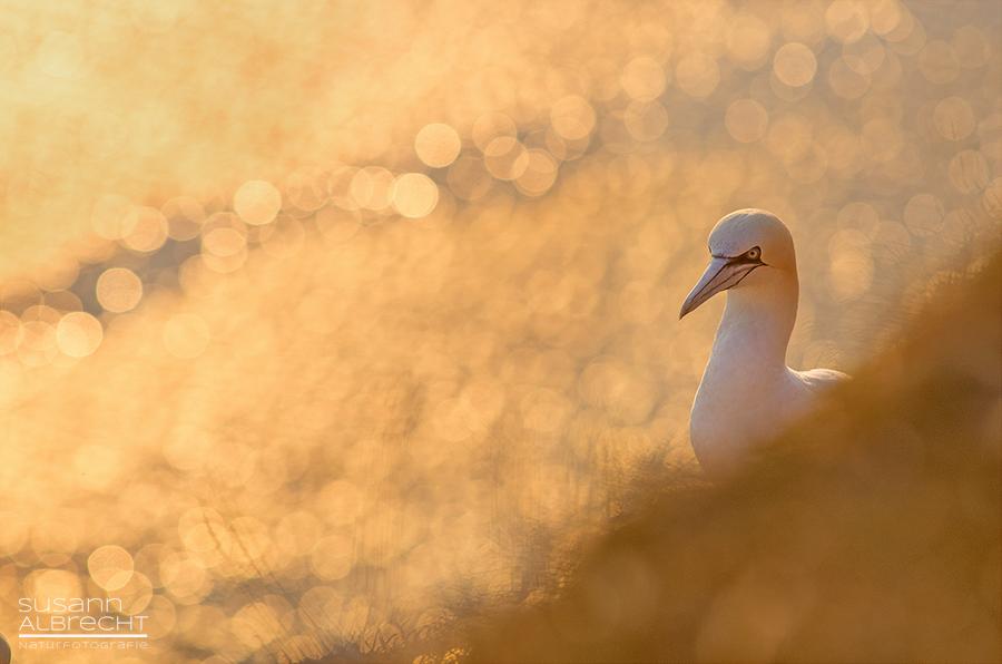 Helgoland bei Sonnenuntergang