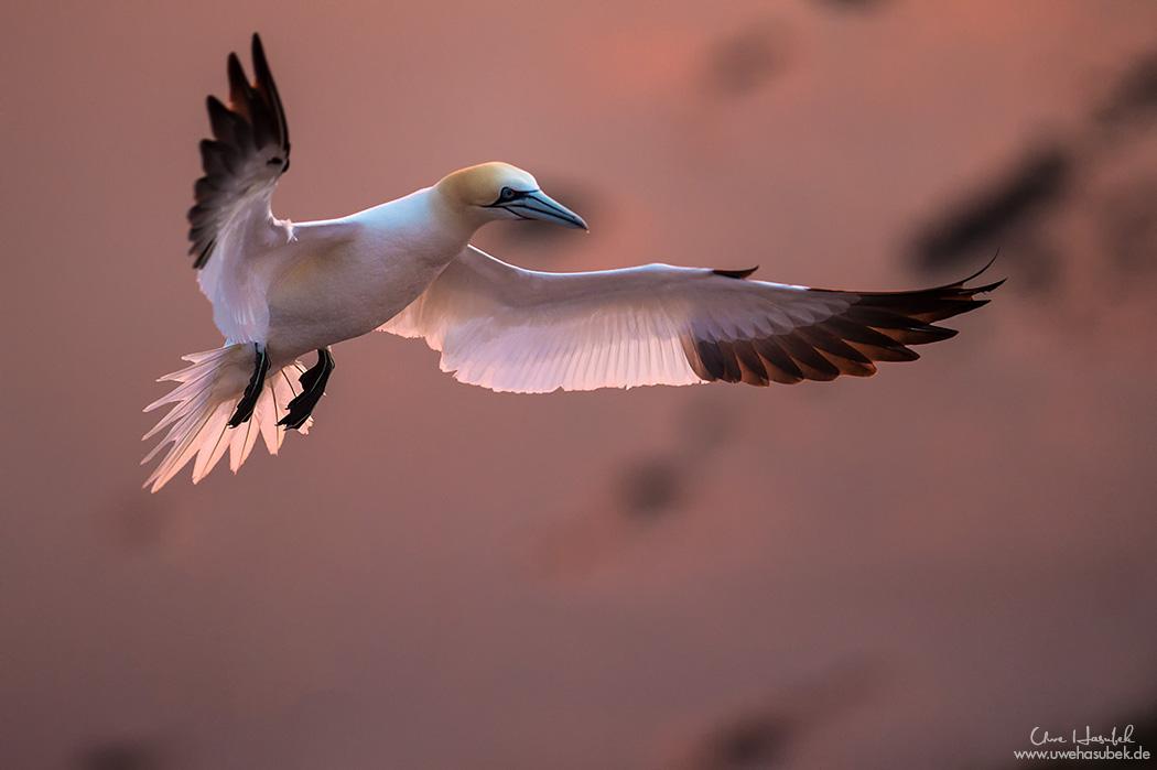 *** Helgoland Sunset ***